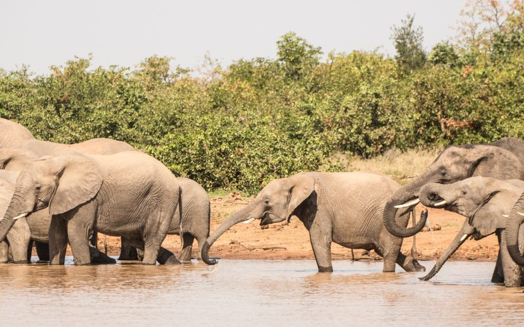 Tracks of reflections for the operational revival of african tourism